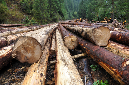 Many Processed Wood Products Come From Trees Cut Down