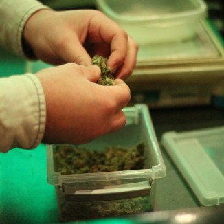 Hazy legality: how legal is Dutch weed really?