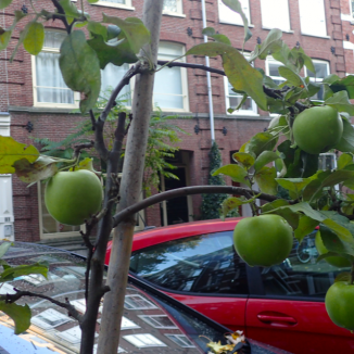 Green fingers in the city: urban farming in Amsterdam