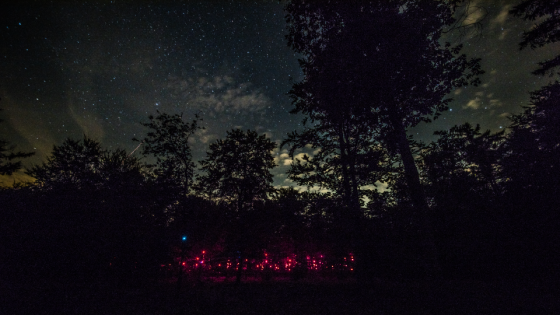 Groningen art collective lights up the woods with a swarm of pixies