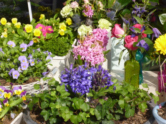 spring flowers at a flower shop