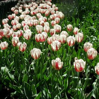 This Dutch design will emerge when Keukenhof gardens bloom next spring