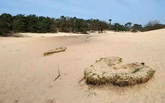 dunes in Brabant