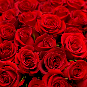 lots of roses background
