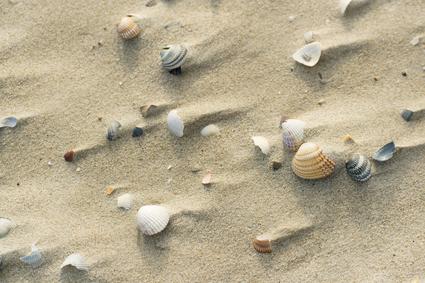 Shells at windy beach