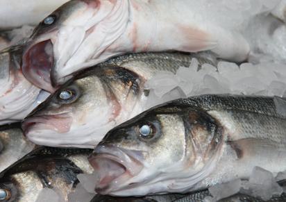fish fishmonger food