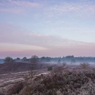 Video: Dutch Scapes – A timelapse journey through Dutch nature