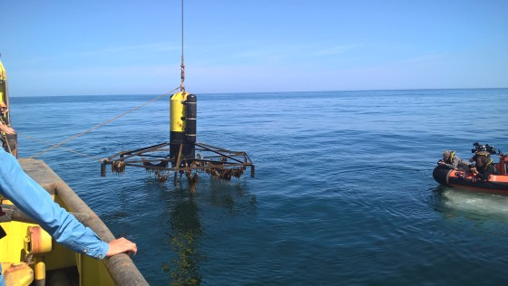 Pioneering Dutch enterprise sets out to put seaweed on the table