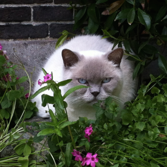 The Dutch love their cats – and here's the proof