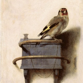 10 things you might like to know about the Goldfinch