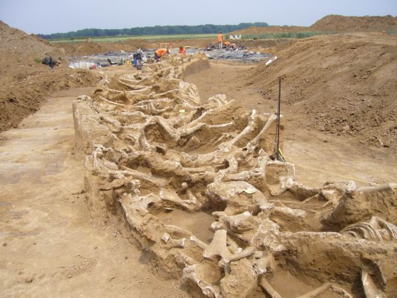 Borgharen horse graves