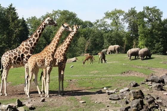 emmen zoo