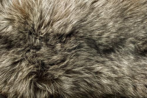 Closeup of beautiful polar Fox fur
