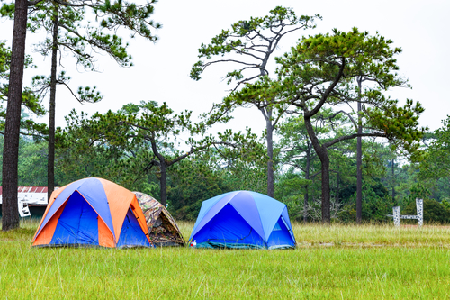 Dome tents camping near pine tree on high mountain