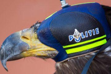 DutchNews podcast – The Bus Baby Eagle Edition – Week 21