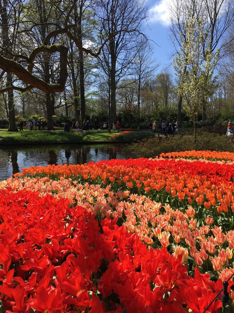 Another cliche... but a Dutch photo competition would not be a Dutch photo competition without tulips.