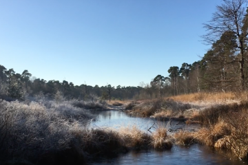 Make the most of the Dutch countryside – a few winter walks