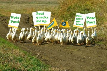 DutchNews podcast – The Paul Ducks Out Edition – Week 23