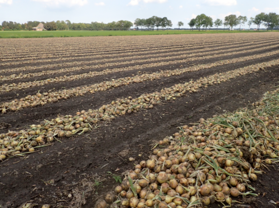 The Netherlands is the second-largest agricultural exporter