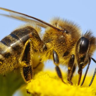 Bees are dying at an alarming rate. Amsterdam may have the answer