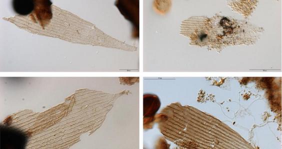 World's oldest moths also roamed Jurassic Park, say Utrecht researchers