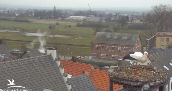 Follow storks, eagles and a kingfisher as spring watch webcams switch on