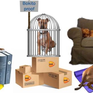 Photomontage for DutchNews podcast featuring Trouby the dog variously in a cage on top of a stack of PostNL boxes with a Bokito Proof sign, in a harness on a yoga mat, asleep on a sofa beside a bottle of Hertog Jan Bastaard beer, and on top of a pile of Van Dale dictionaries with a banana in the foreground.