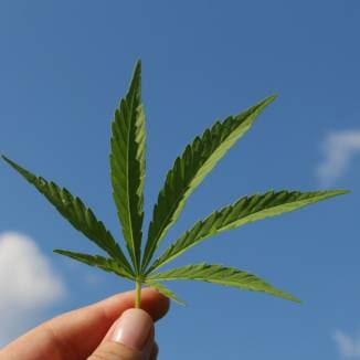Medicinal cannabis users left high and dry by Dutch tolerance policy