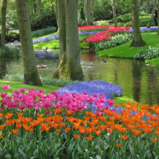 DutchNews podcast – The Infected Tulip and Painted Zwerfkei Edition – Week 17