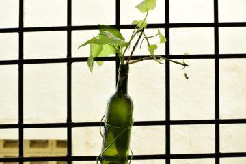 Plant in wine bottle in office setting