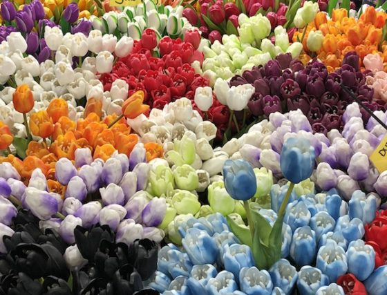 Plastic tulips are more likely to bloom. Photo: Senay Boztas